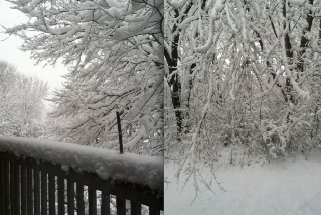 branches so heavy with snow almost touching the ground and our deck