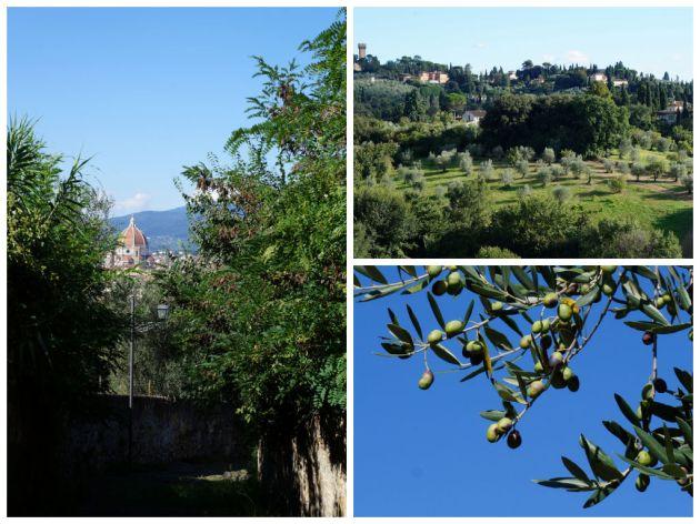 olivepath