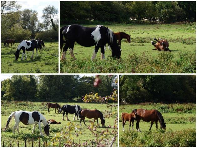 iffleyhorses