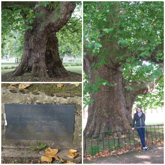 magbigtree